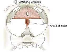 Diagram of a female pelvis indicating the anal sphincter